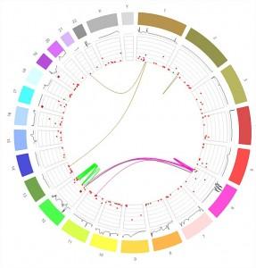 Met RStudio maak je prachtige grafieken (in dit geval de weergave van een genoom). Bonr: https://gallery.shinyapps.io/genome_browser